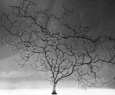 miniature tree in black and white Stock Photo