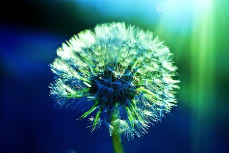 flower illuminated by a ray of sunshine Stock Photo