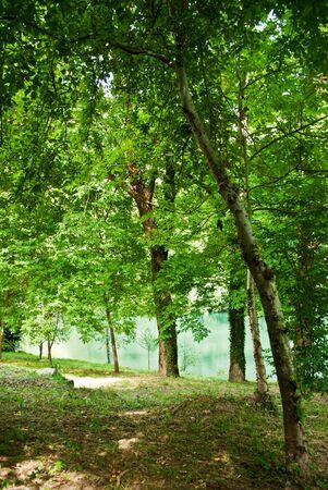 trees near a lake Stock Photo