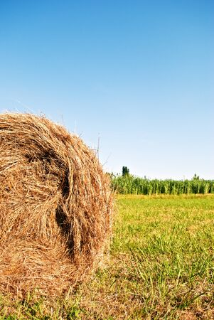 green field with bales of hay Stock Photo