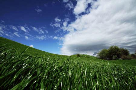 prairie in Tuscany
