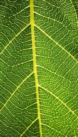 natural grain Stock Photo