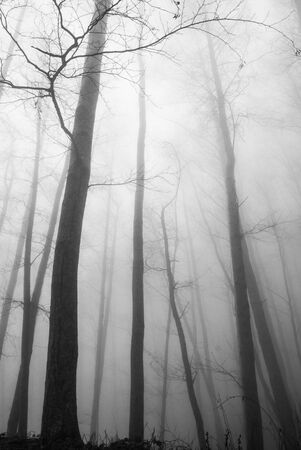 mist among the trees in the mountains