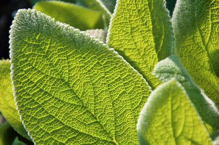 backlit green leaves Stock Photo