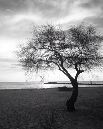 Tree on the beach Stock Photo