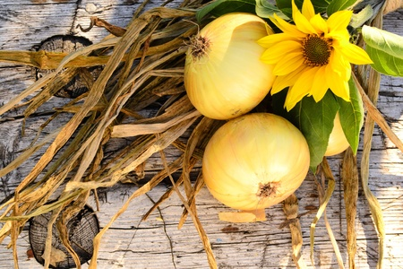 Onion and one little sunflower on the wooden bench Stock Photo - 15329199
