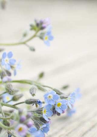 A bouquet of tiny Forget me not flowers, the background is a wooden board photo