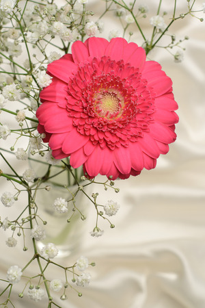 Cerise pink Gerbera and baby breath flower, silken cloth  photo