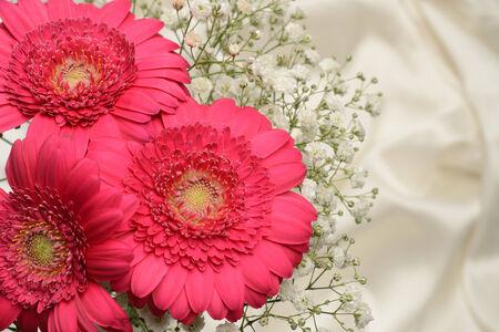 silken: Cerise pink Gerbera and baby breath flowers, silken cloth  Stock Photo