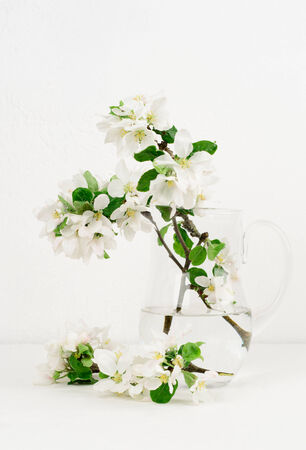 Freshly picked apple flowers in a jug, background white painted wall photo