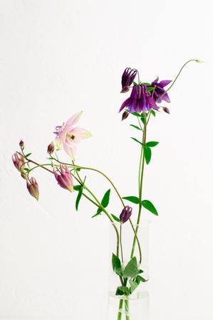 Lila Rosa Columbine-Blumen-Arrangement Stillleben, Weißen Steinmauer ...