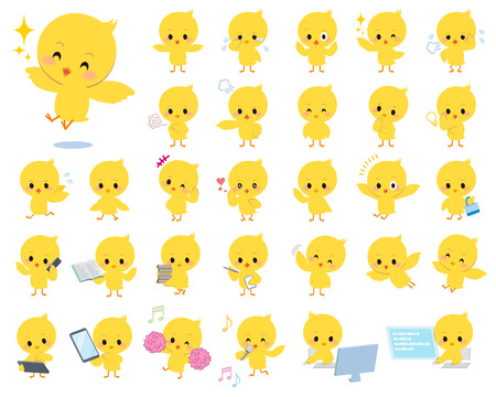 baby animal: Set of various poses of baby chick yellow bird