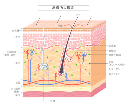 Structure in the skin Japanese notation Stock Illustratie