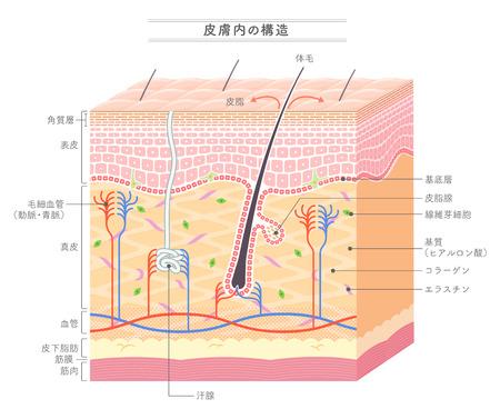 Structuur in de huid Japanse notatie Vector Illustratie