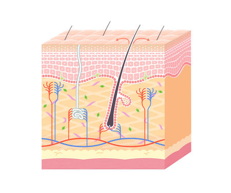 Structure dans la peau sans notation