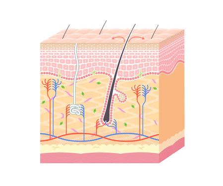 Structuur in de huid geen notatie