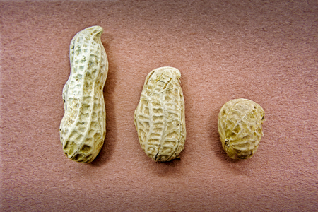 Peanuts come in all sizes,Big,Medium and Small