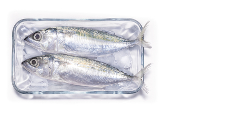Freshly Prepared Raw Sardine Fish on Ice with a White Background