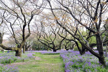 Horror trees with lavender flower Stock Photo - 8525492