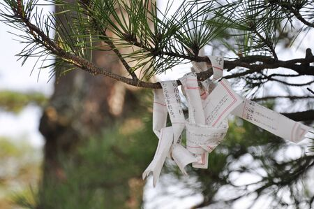 Omikuji or Japan fortune telling tied on a tree Stock Photo