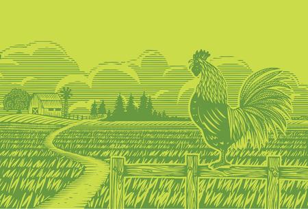 field and sky: Estilo de grabado, gallo cantando al arroz present� Vectores