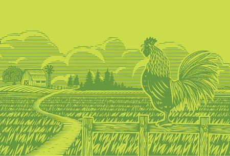 Woodcut style, rooster crowing at rice filed Vector