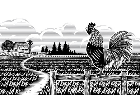 Woodcut style, rooster crowing at rice filed