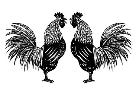 animal cock: Disegnata a mano di galli