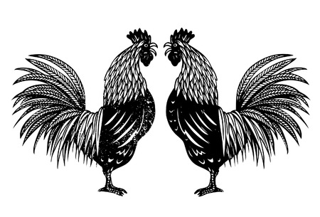 crowing: Hand drawn of roosters
