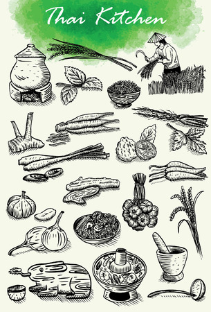 field of thai: Hand drawn of Thai herbs and food, vector