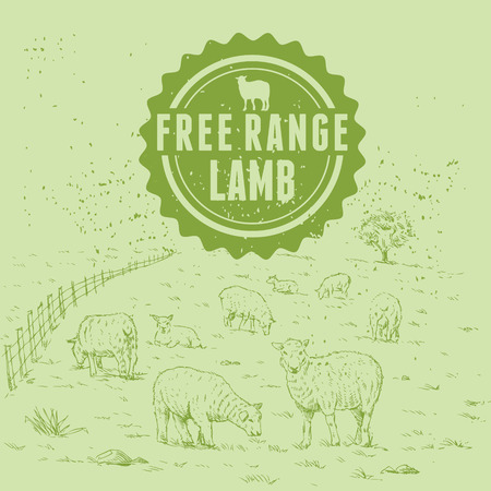 new zealand landscape: Hand drawn flock of sheep at farm with free range lamb label. Illustration