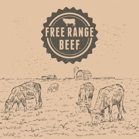free range: Hand drawn of cattle with free range beef label