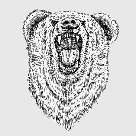 predators: Hand drawn roaring bear head, vector Illustration