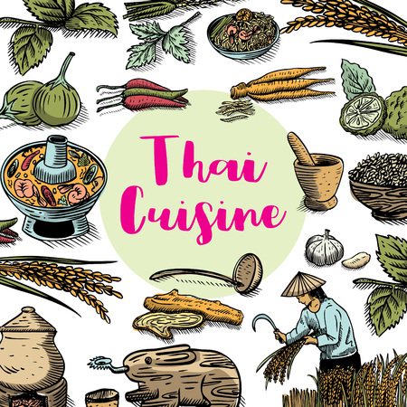 Hand drawn Thai food and herbs on a chalk board, vector Illustration