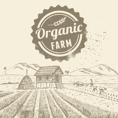 Hand drawn organic rice field