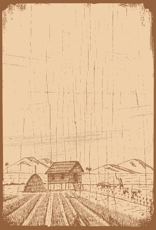 Hand drawn rice field