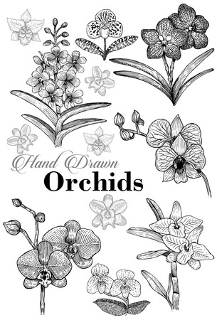 Hand drawn set orchid flowers, Vector Ilustrace