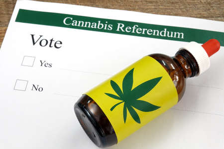 Close up cannabis oil extract in a bottle on referendum ballot