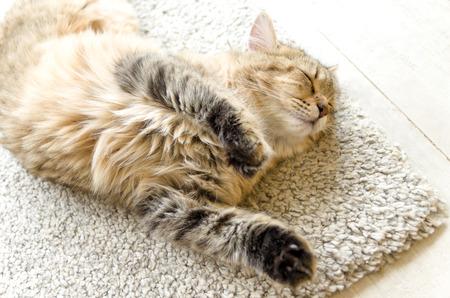 Funny orange tabby sleeps on rug