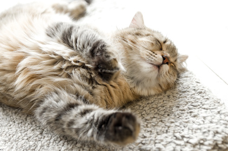 tubby: Young cat sleeping with eyes closed on white carpet