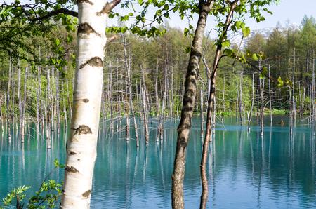 Blue Pond at in Hokkaido, JAPAN