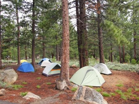 숲에서 텐트의 그룹