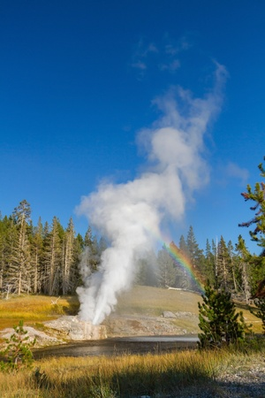 boiling: Eruption of Riverside Geyser with a rainbow at Yellowstone National Park