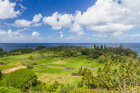 taro: View of the Keanae peninsula in Maui, Hawaii with it