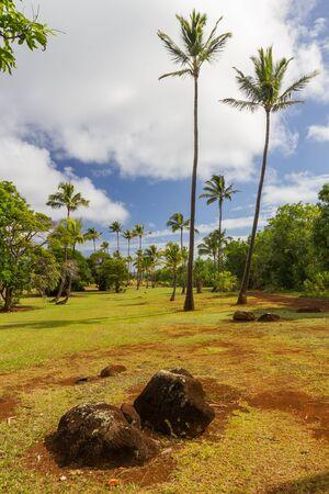 카우아이, 하와이에서 붉은 토양, 화산 바위와 코코넛 나무와 프리 스톡 콘텐츠