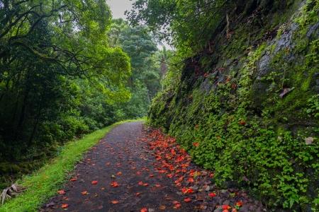 마우이, 하와이에서 울창한 숲을 통해 붉은 꽃이 흩어져 경로