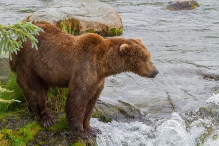 브룩스 알래스카 서 케트 마이 국립 공원에서 갈색 곰은 연어의 도착을 기다리고 폭포