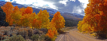 autumn path: Fall Foliage at the Eastern Sierra Nevada Mountains in California