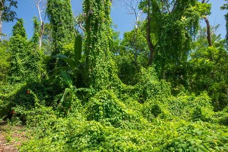 코스타리카의 열대 우림의 무성한 식물