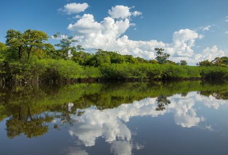 지류의 물에 아마존 정글의 아름 다운 반영